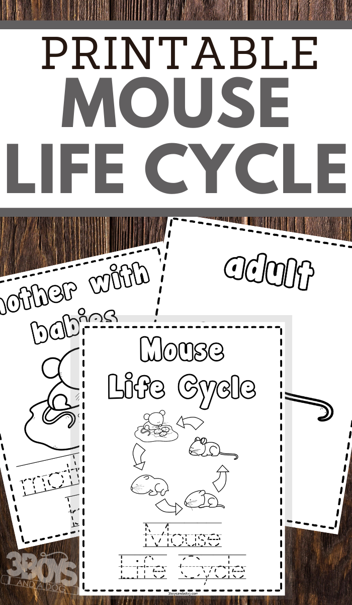 preschoolers mouse and mice life cycle coloring and handwriting worksheets