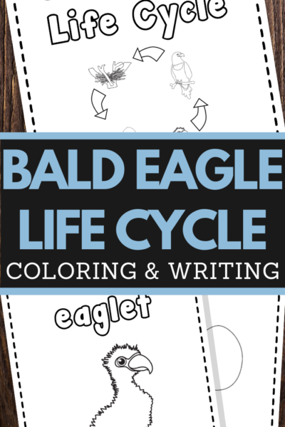 Bald Eagle Life Cycle Printable Worksheets for preschool and lower elementary