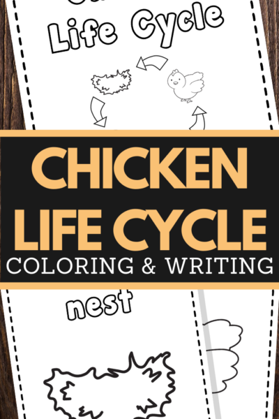 Chicken Life Cycle Printable Worksheets for preschool and lower elementary