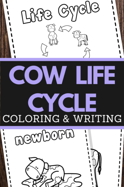 preschoolers cow life cycle coloring and handwriting worksheets