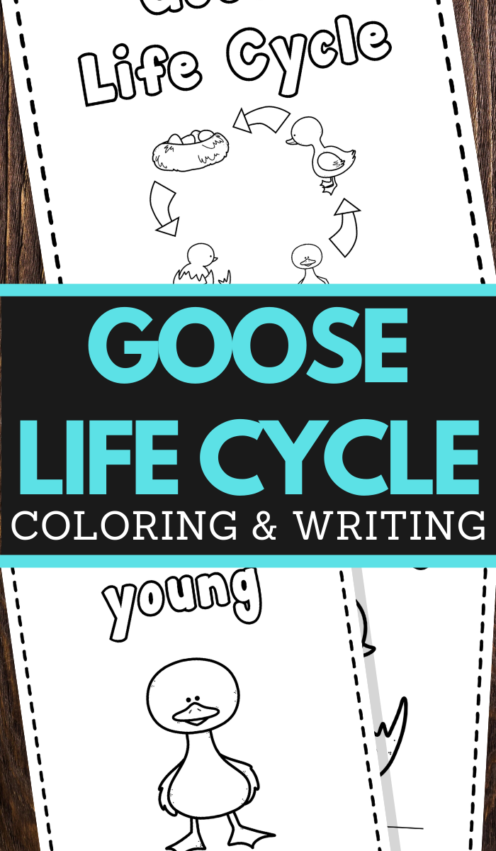 preschoolers goose life cycle coloring and handwriting worksheets