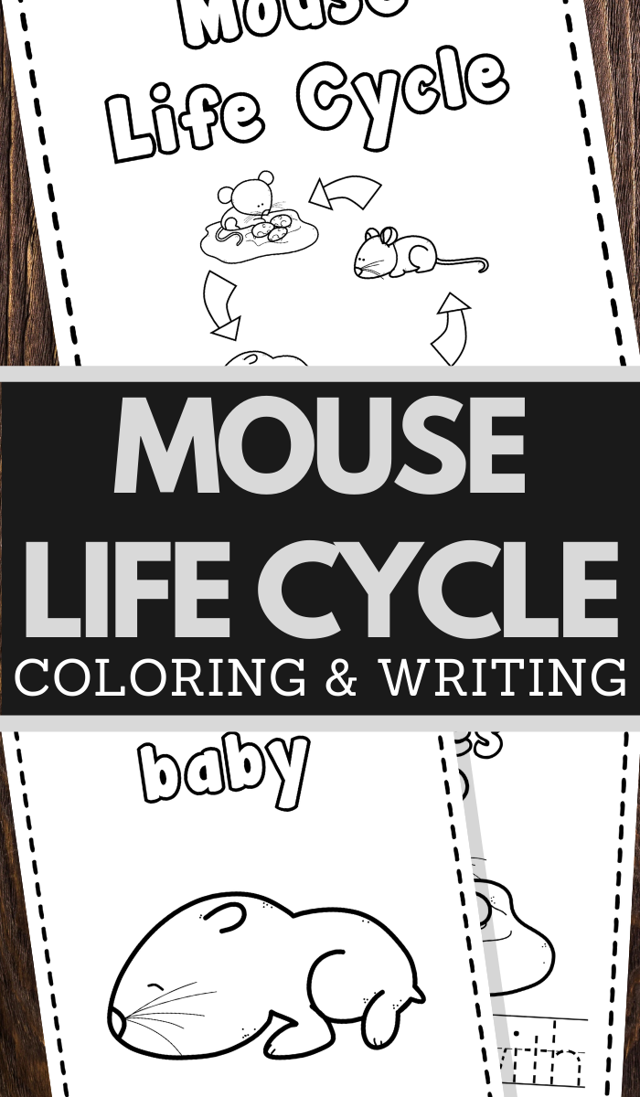 Mice Life Cycle Printable Worksheets for preschool and lower elementary