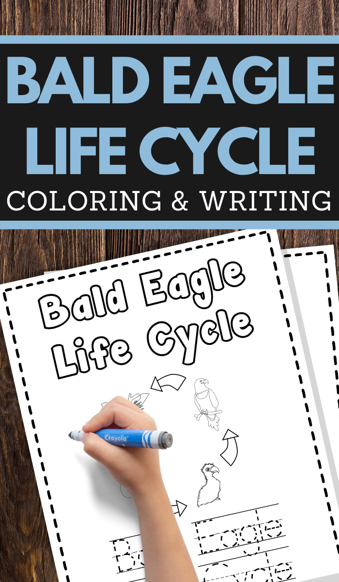 help your young children learn the life cycle of a bald eagle while practicing pencil grip handwriting and fine motor