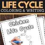 help your young children learn the life cycle of a chicken while practicing pencil grip handwriting and fine motor