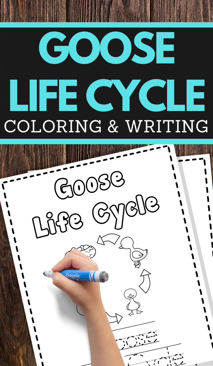 Goose Life Cycle Printable Worksheets for preschool and lower elementary