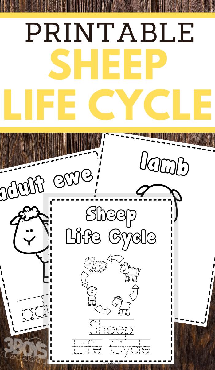 preschoolers sheep life cycle coloring and handwriting worksheets