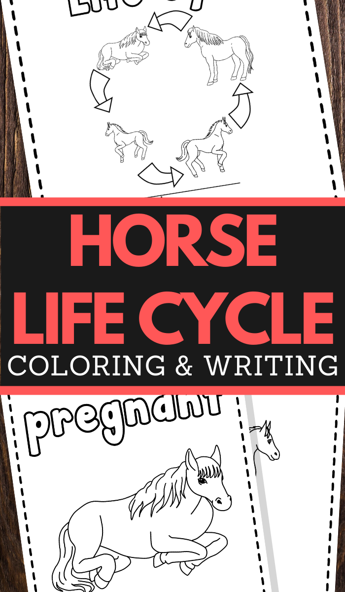 Horse Life Cycle Printable Worksheets for preschool and lower elementary