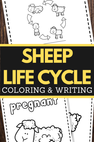 Sheep Life Cycle Printable Worksheets for preschool and lower elementary