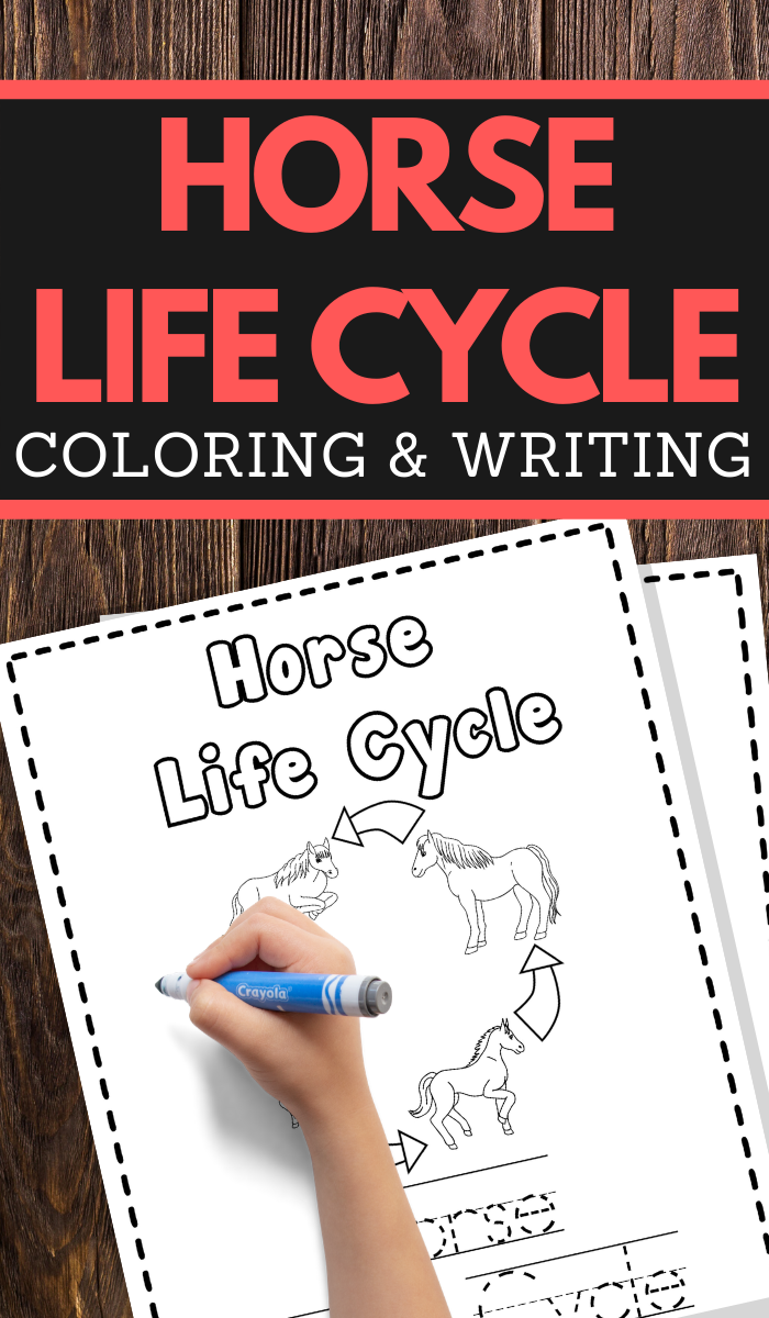 help your young children learn the life cycle of a horse while practicing pencil grip handwriting and fine motor