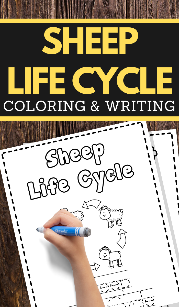 help your young children learn the life cycle of a sheep while practicing pencil grip handwriting and fine motor