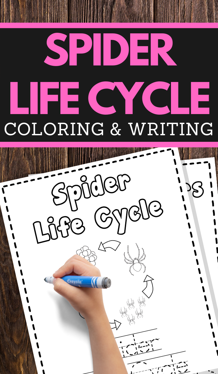 Spider Life Cycle Printable Worksheets for preschool and lower elementary