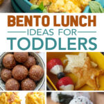 best bento lunch box ideas for toddlers
