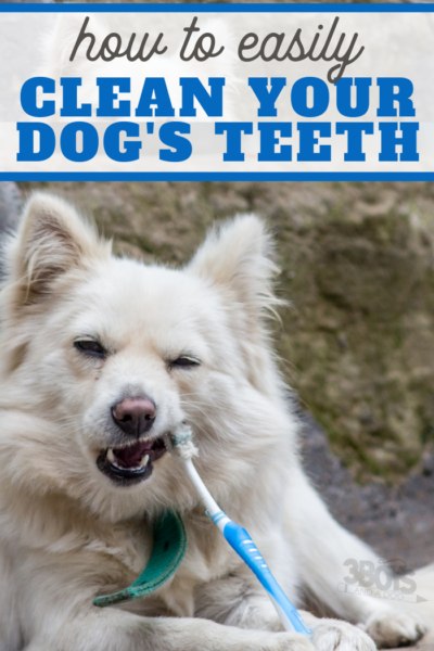 white dog chewing on toothbrush