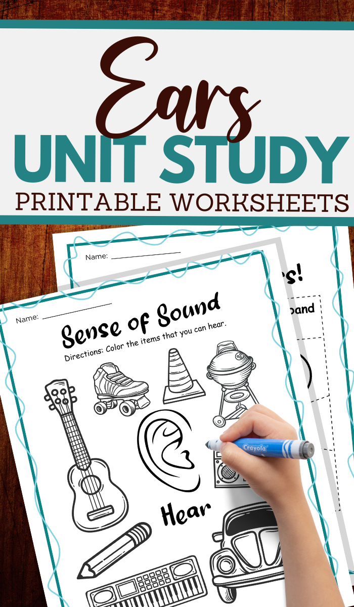 parts of the ear and more hearing worksheets
