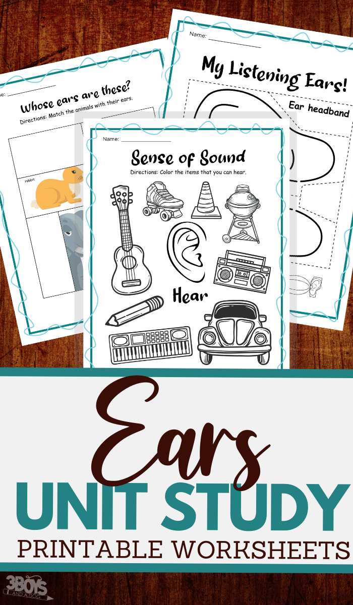 printable unit study worksheets for the human ear