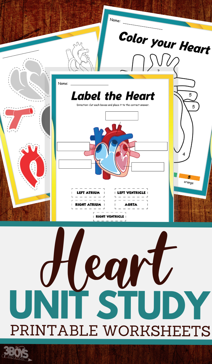 printable unit study worksheets for the human heart