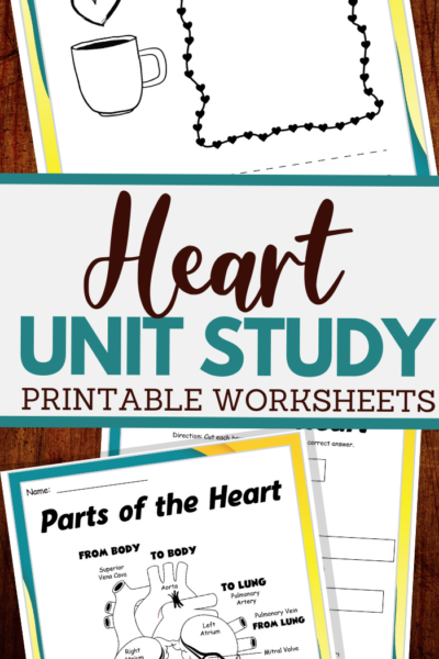 parts of the heart and more worksheets