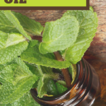 benefits of cornmint essential oils