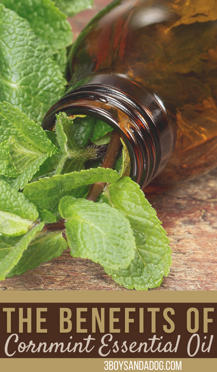 smart and healthful uses for field mint essential oil